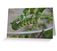 The tomato worm... Greeting Card