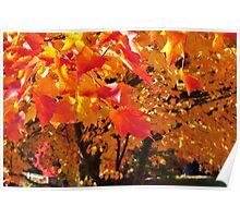 Autumn Fire - Portland, Oregon Poster