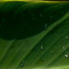 Leaf Droplets by sshhoirtt