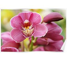 Deep Pink Orchid Poster