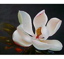 Divine magnolia Photographic Print