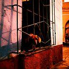 Perrito Cubano by Rebecca Wachtel