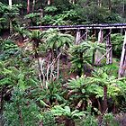 Railway Wooden Bridge for Puffing Billy by Virginia McGowan