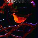 Christmas Robin by Dawn B Davies-McIninch