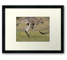 Hopping Kangaroo  Framed Print