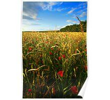 Poppies at Longbridge Deverill, Wiltshire Poster