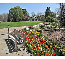 Tulip Time at Mill Creek Park Photographic Print