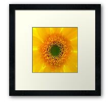 Staring At The Sun II Framed Print