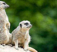 Meerkats on Guard by Robert Scammell