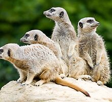On Lookout by Robert Scammell