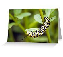 Striped Caterpillar Greeting Card