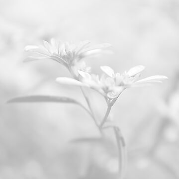 White V by Damienne Bingham