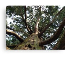 Tall trees  Canvas Print