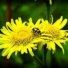 Twosome, Dandelion with yellow Ladybug by NicoleBPhotos