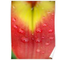 Asiatic Lily petal Poster