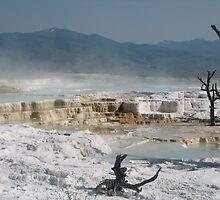 Mammouth Springs of Yellowstone by mwawrzyniak