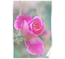 Romantic rose in a mist Poster