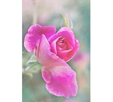 Romantic rose in a mist Photographic Print