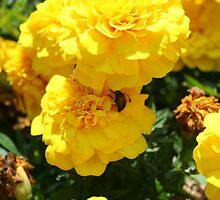 ladybug on a marigold by ephotodesigner