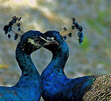 True Love by Jeff Palm Photography