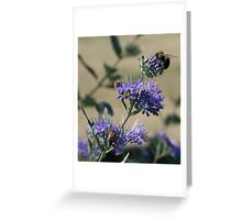 Bumble bees x 3 Greeting Card