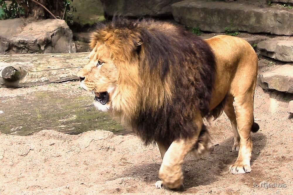 The Lion King by Jo Nijenhuis
