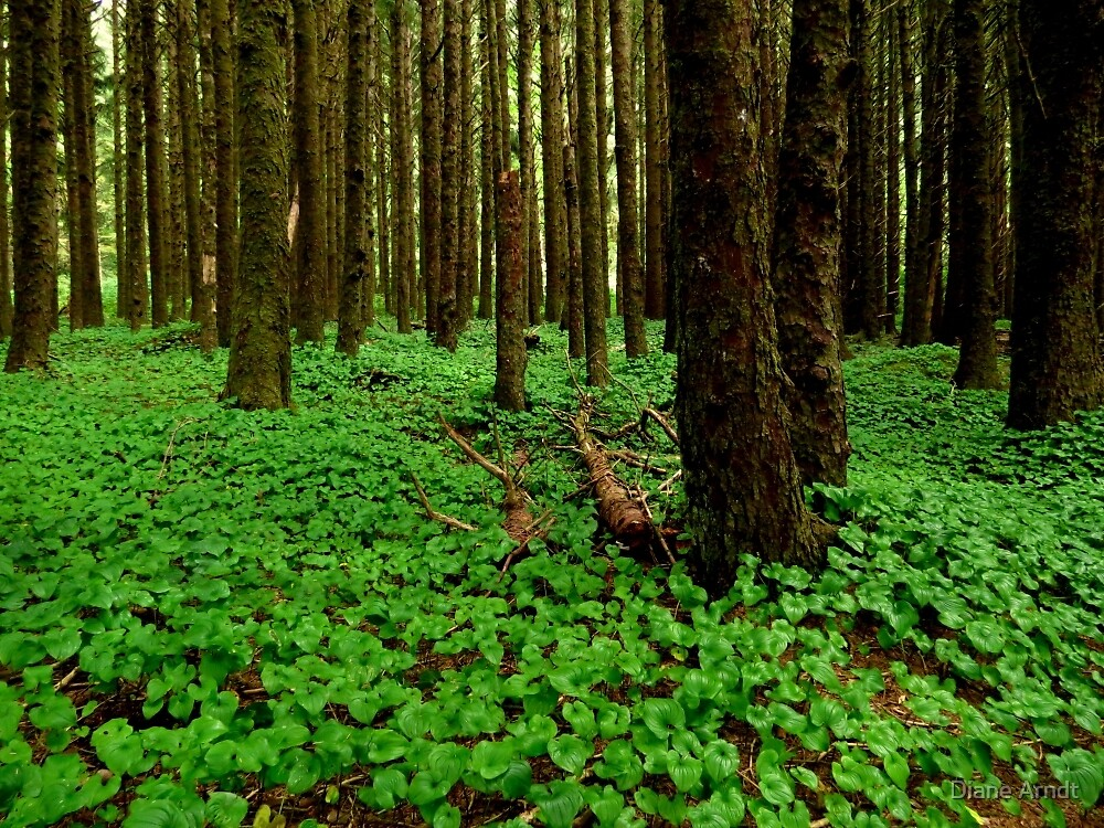 The Forest Floor..Neptune Beach..Yachats, Oregon by Diane Arndt