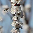 Spring by Geoffrey Wicking