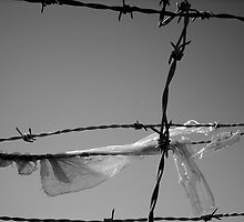 plastic on barbed wire by seraphidart