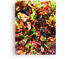 Colorful Plant Canvas Print
