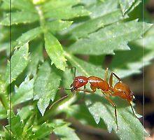 Fire  Ant by Marcella Babineaux