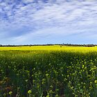 Fields of Gold by Gormaymax