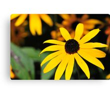 Balck Eye Susan Canvas Print