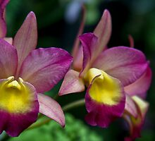 Pink Orchids by sshhoirtt