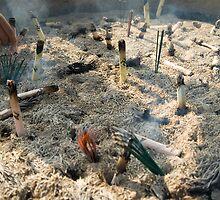 Burning incense (2) by Joakim Leroy