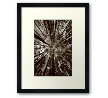 mountain ash..canapy. Framed Print