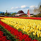 Tulip Fest by Jason Weigner