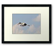 White stork in flight Framed Print