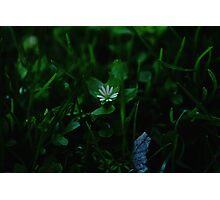 Tiny Gems Underfoot Photographic Print