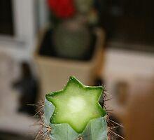 Im Cactus by Jordan N Clarke