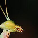 Green Mantis Portrait by BluAlien