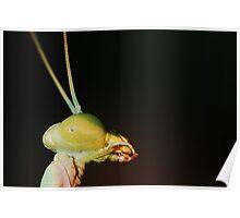 Green Mantis Portrait Poster