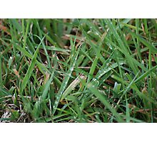 Dew on the grass Photographic Print