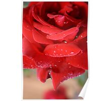 red love rose Poster