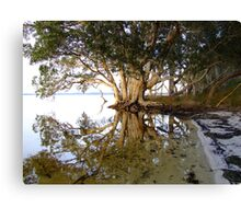 Paperbark Reflections Canvas Print