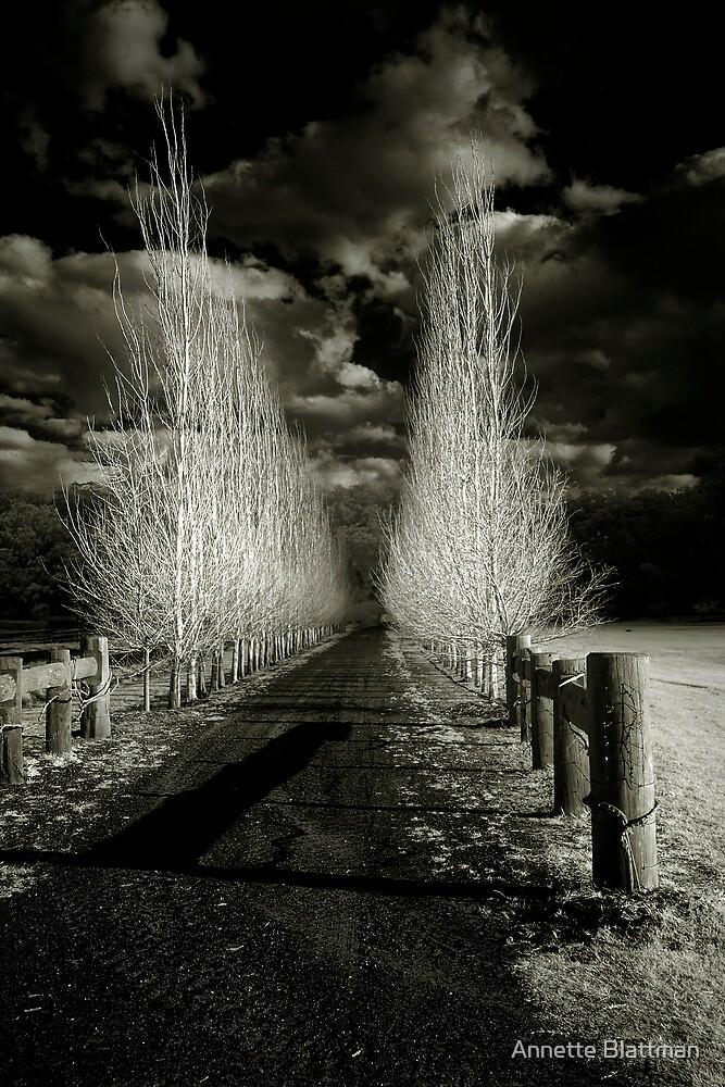 The Infrared Lane by Annette Blattman