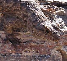 Lizard on Rhyolite by danahunter