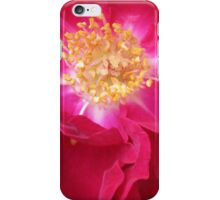 Old Fashioned Red Rose iPhone Case/Skin