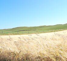 Summery Fields  by HELUA