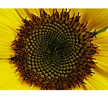 flowers within a flower Photographic Print